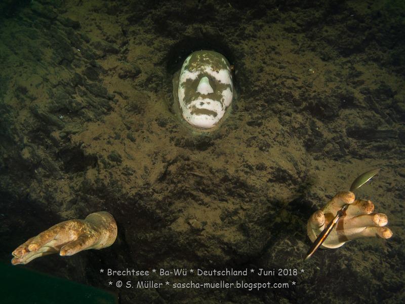 [2018.06.30+Brechtsee+-+Copyright+by+Sascha+Mueller+0010%5B4%5D]