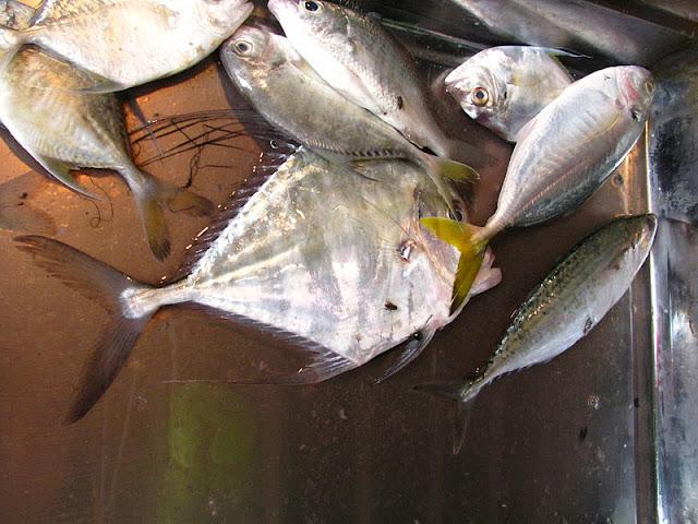 Из зимы в лето. Филиппины 2011 - Страница 7 IMG_0018%252520%2525286%252529