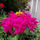 Gardening 2012 - 115_2156.JPG