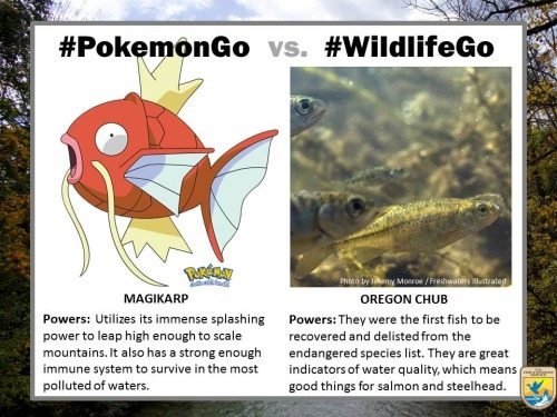 pokemongo-vs-wildlifego-9
