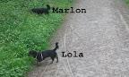 Die Perspektive täuscht. Lola ist halb so groß wie Marlon.