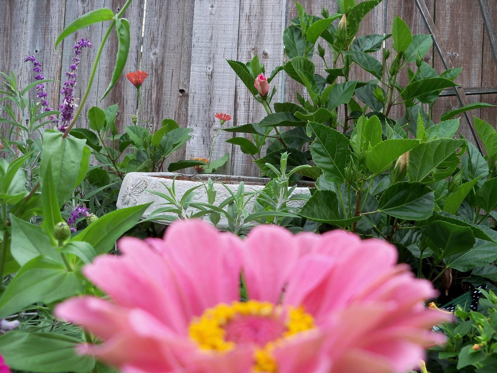 Gardening 2012 - 115_1990.JPG