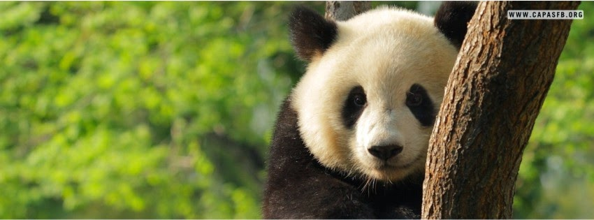 Capas para Facebook Panda