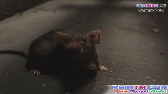 Xem Phim Chuột Siêu Quậy - Mousehunt - phimtm.com - Ảnh 3