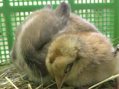 Cute-Rabbit-03 (3)