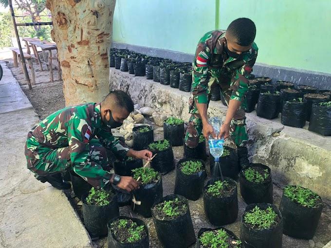 TNI Budidaya Cabai dan Terong Untuk Edukasi Masyarakat di Perbatasan.