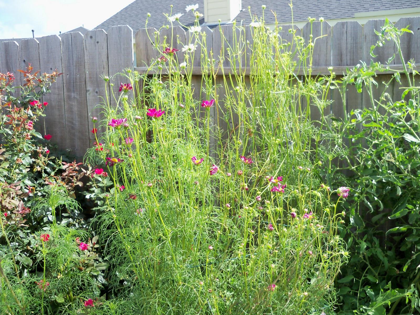 Gardening 2010, Part Three - 101_5016.JPG