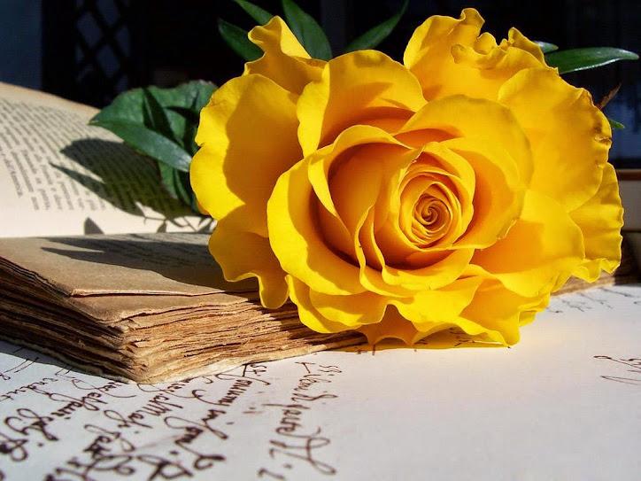 hoa tươi đà nẵng - hoa hồng vàng