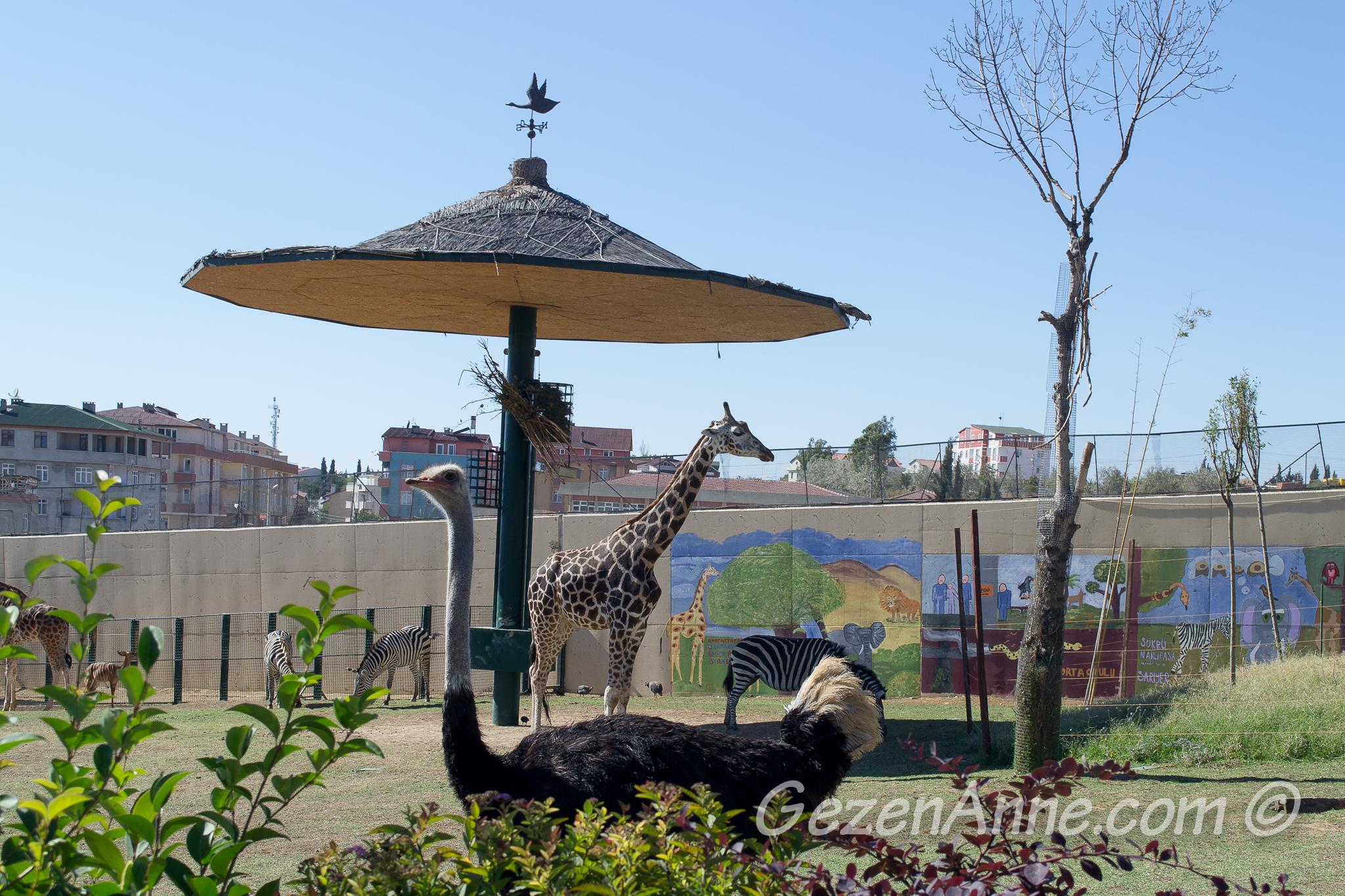 Darıca'daki Faruk Yalçın hayvanlar alemi İstanbul'a en yakın hayvanat bahçesi