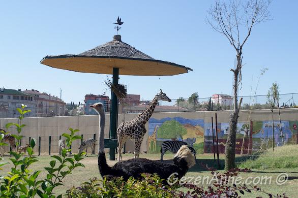 Darıca Hayvanat Bahçesinde zürafa ve devekuşu
