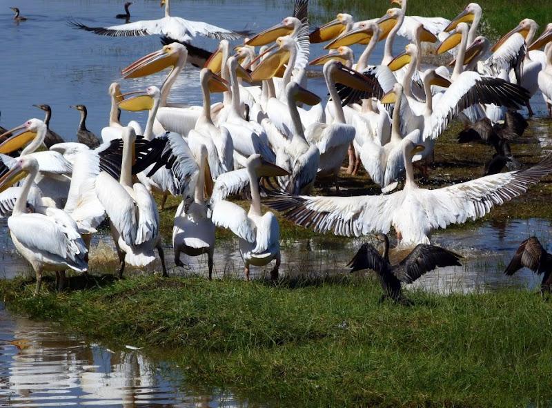 #wildlifesafaritanzania #Travelbloggerindia #Travelblog #Tanzaniatravelblog #tanzaniatourism #Tanzaniawildlifespotting #wildlifesafariafrica #Ngorongoroconservationarea