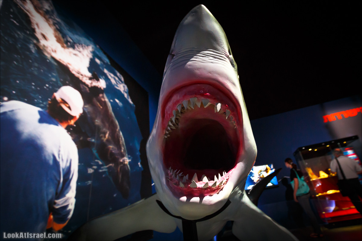 Выставка Мир Акул в Тель Авиве | Planet shark in Tel Aviv | תערוכה עולם הכרישים בתל אביב | LookAtIsrael.com - Фото путешествия по Израилю