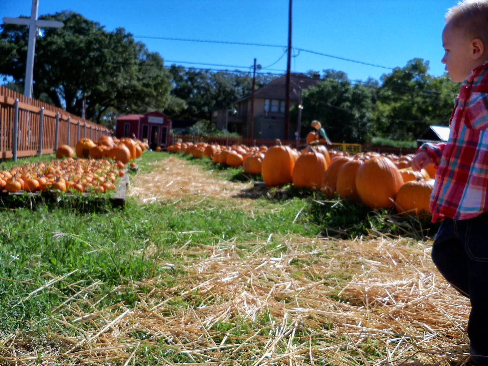Pumpkin Patch - 115_8216.JPG
