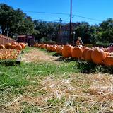 Pumpkin Patch - 115_8216.JPG