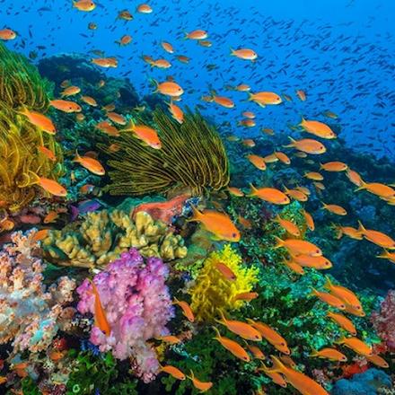 Η κλιματική αλλαγή επηρεάζει τελικά διαφορετικά τα κοράλλια και τα σφουγγάρια σύμφωνα με μια νέα μελέτη
