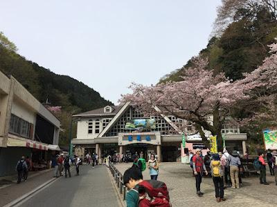 高尾山で花見宴会