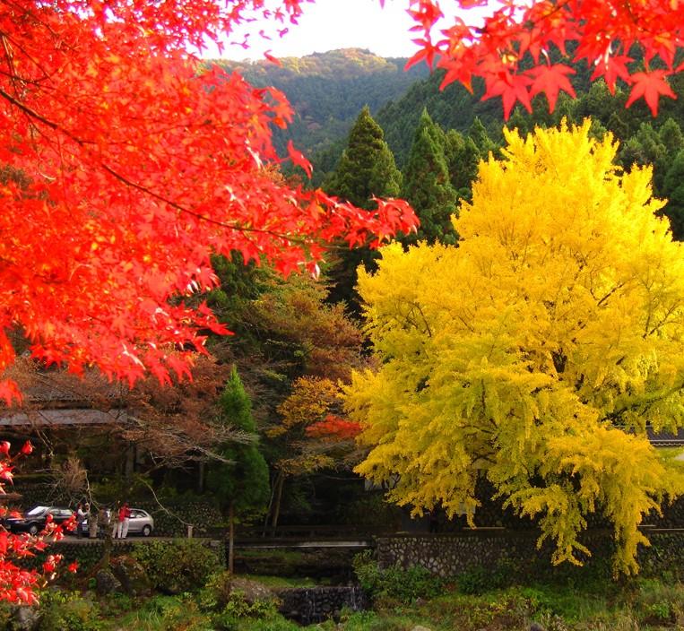 япония | Записи с меткой