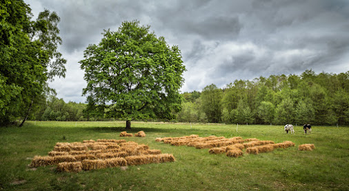 somewhere in Brandenburg  for #TreeTuesday ( +Tree Tuesday ) Curated by +Christina Lawrie , +Allan...