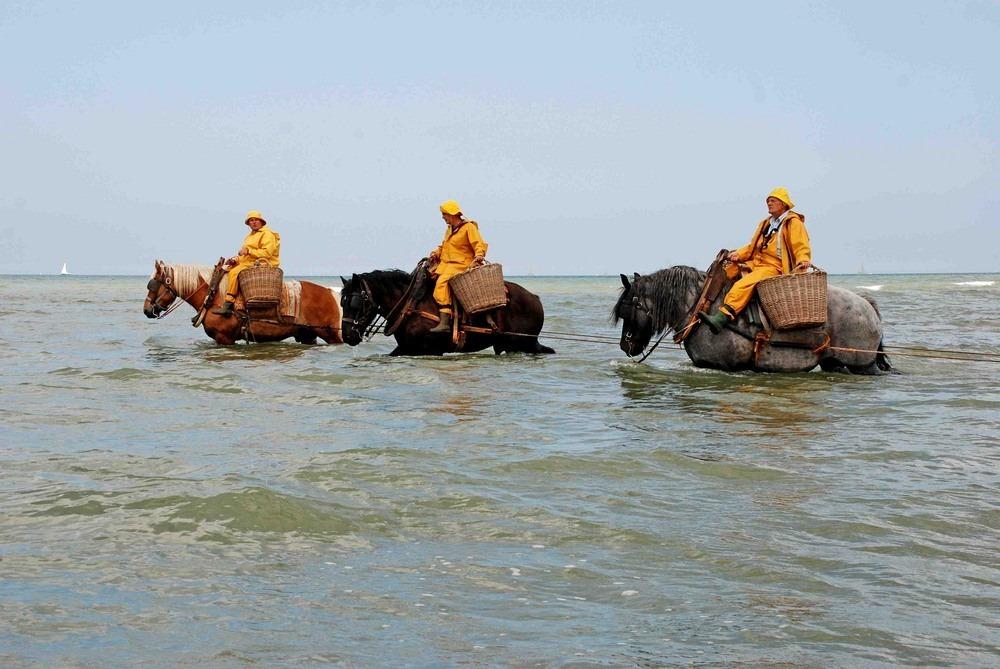 horseback-fishing-oostduinkerke-4