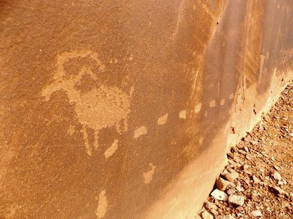Bighorn sheep and tracks