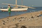Drietenen en Steenlopers in Iwik, Mauritania