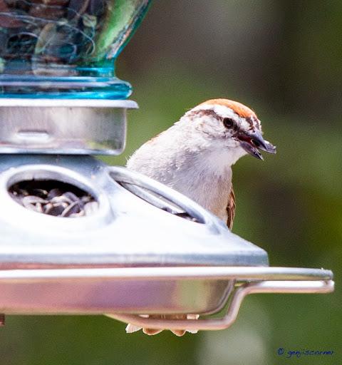Sparrow_Seed2-2014-06-8-21-13.jpg