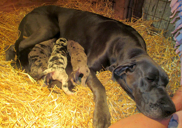 Saffy & babies @ 2 weeks