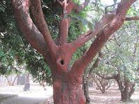 https://lh3.googleusercontent.com/-45EhqXO562I/T3wGguUwoLI/AAAAAAAAAQE/CThnp9SQm4U/s1600/ZZ+Unknown+085+Tree+-+Branch.jpg