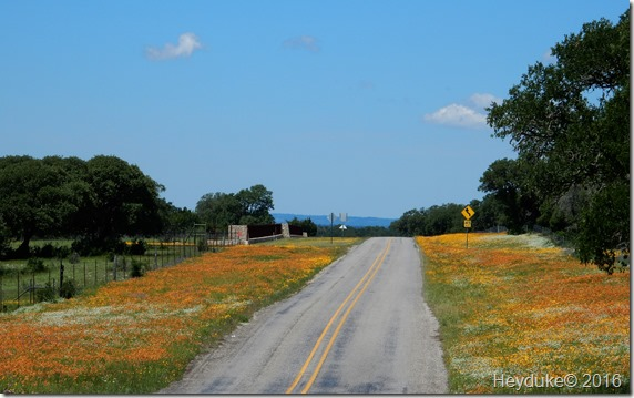 Texas Hill Country 019