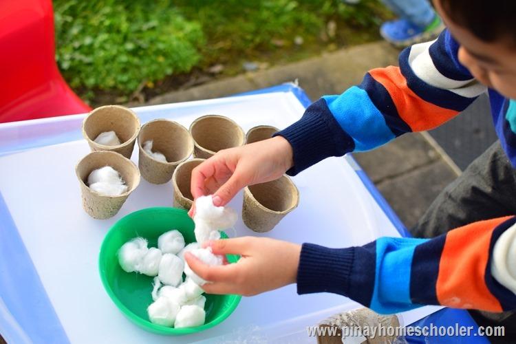 Montessori Plants
