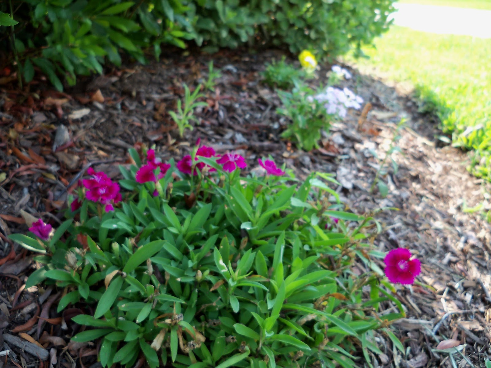 Gardening 2010, Part Two - 101_3495.JPG