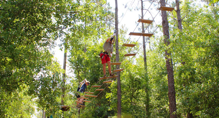 Take on this towering forest adventure with all the family