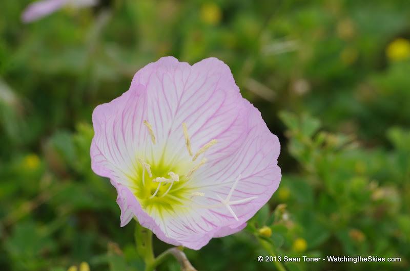 2013 Spring Flora & Fauna - IMGP6366.JPG