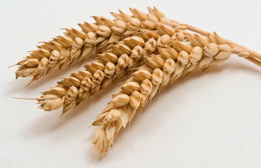 sterker graan, zwaarder op de maag