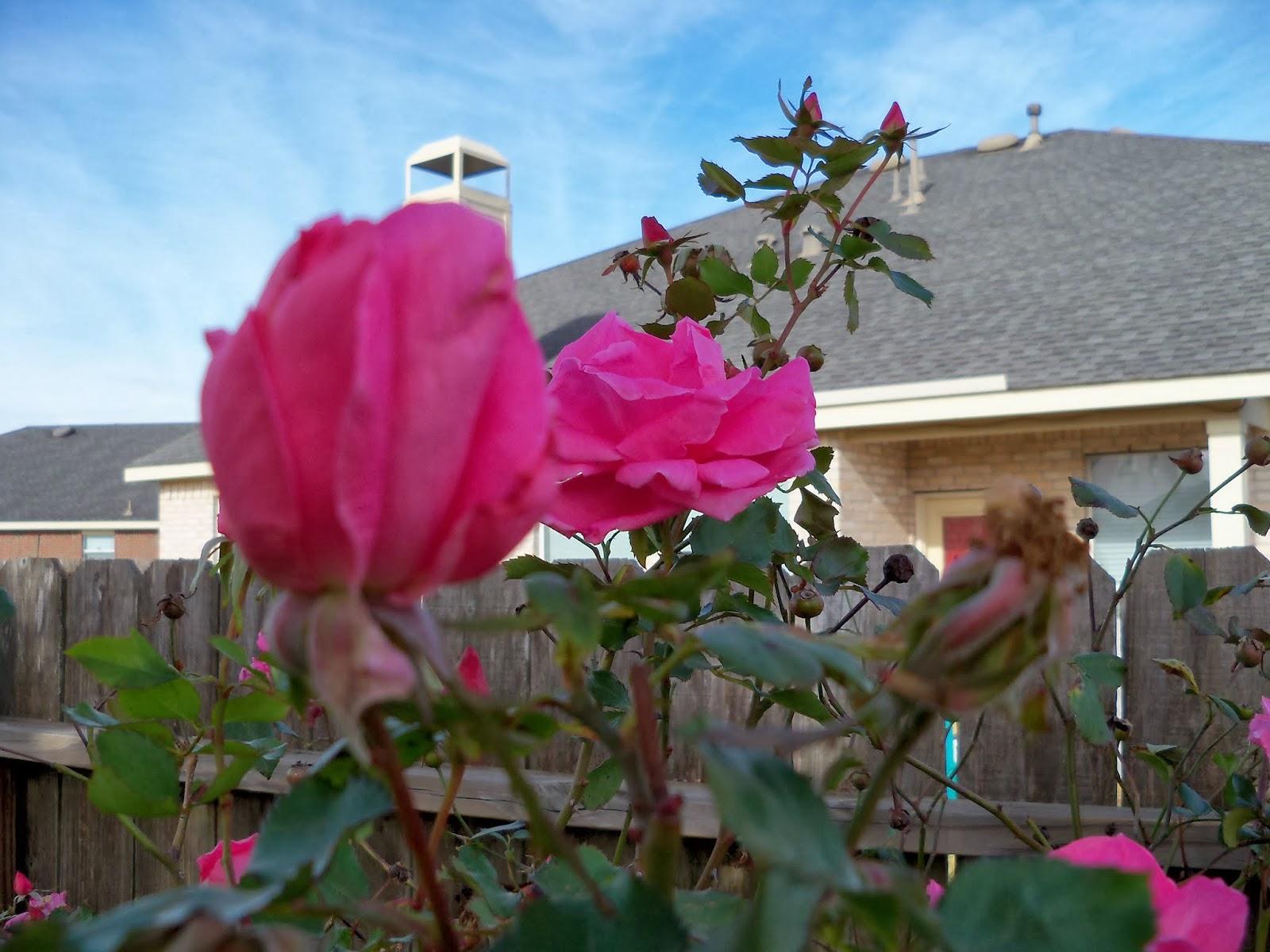 Gardening 2013 - 115_9995.JPG