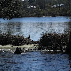 Fowl Marsh from Boat Feb3 2013 131