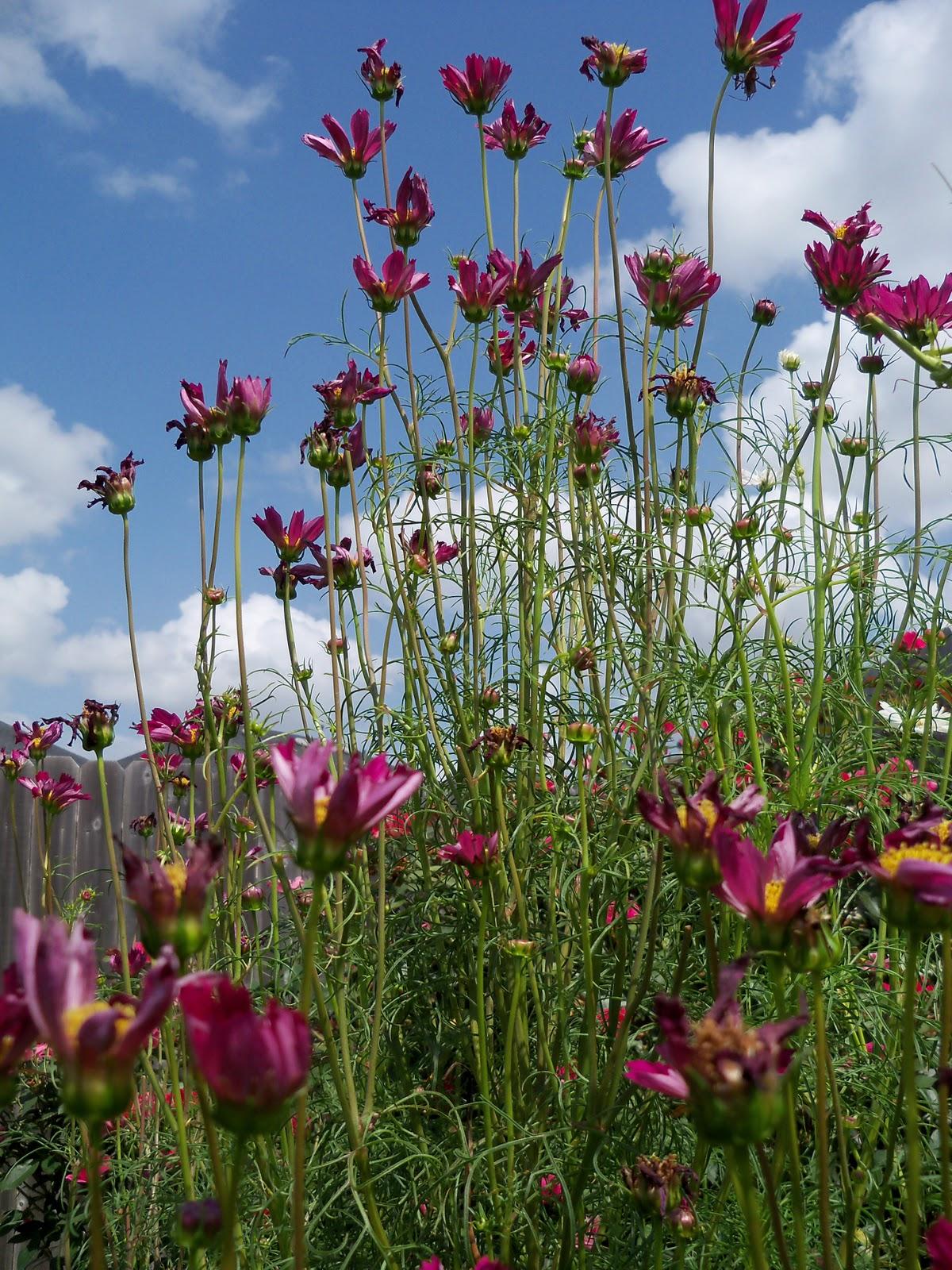 Gardening 2010, Part Three - 101_5122.JPG