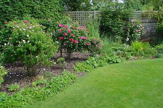 Photo: Back Garden in Bloom