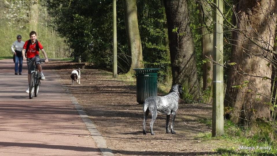 Balades canines en Nord (59)/Pas de Calais (62) - Boulogne-sur-Mer, Calais et Lille - Page 4 DSC01865