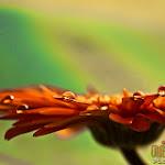 Flower 009_1280px.jpg