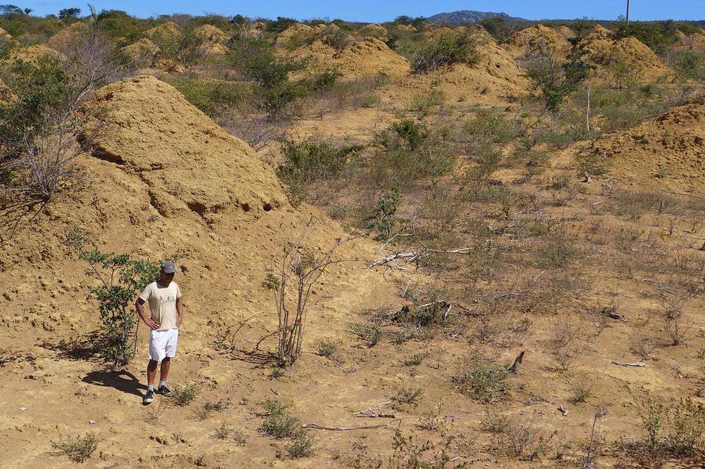 brazil-termite-mounds-4
