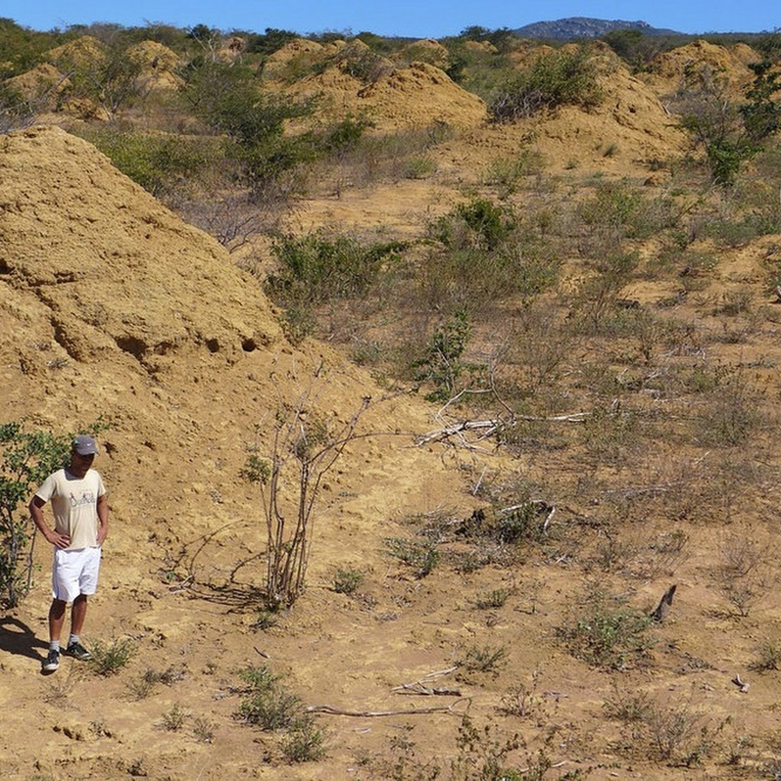 The 4,000-Year-Old Termite Mounds The Size of Britain