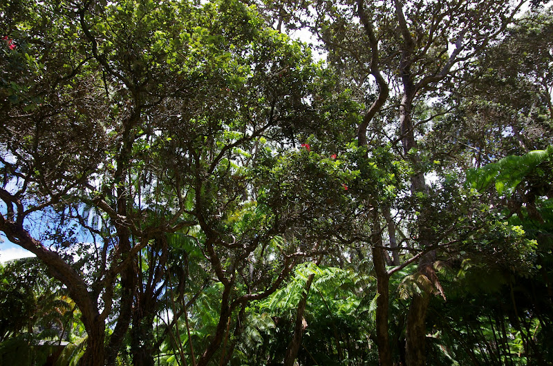 06-20-13 Hawaii Volcanoes National Park - IMGP7774.JPG