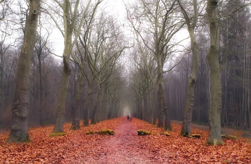 Passeggiata di fine autunno di Patrix