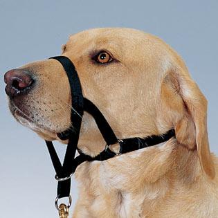 halti head collar fitting instructions