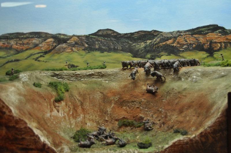 buffalo-jump-1