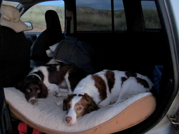 Boulder and Torrey resting in the Jeep