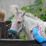 Paard & Erfgoed 2 sept. 2012 (27 van 139)
