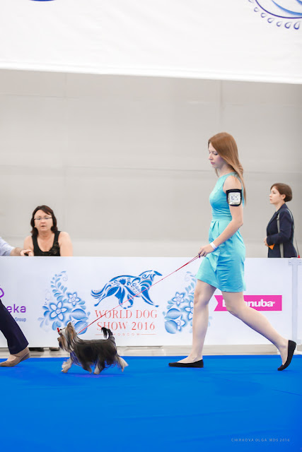 World Dog Show-2016 0071