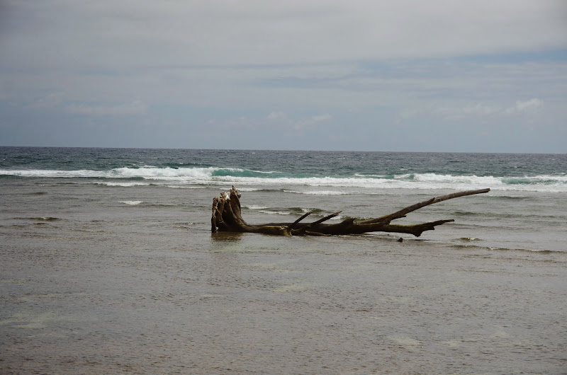 06-25-13 Annini Reef and Kauai North Shore - IMGP9316.JPG